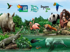 Enjoy 30% Off Admission Ticket in Wildlife Reserves Singapore with Passion Card