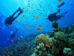 3D2N stay at Paya Beach Spa & Dive Resort w/ Snorkeling Excursion to Renggis & Marine Park