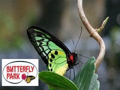 1-FOR-1 Admission to Butterfly Park & Insect Kingdom with NTUC Card