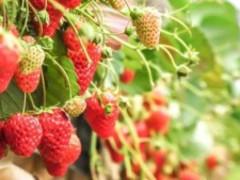Fruits & Tokyo