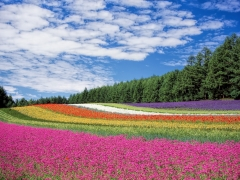 Fly to Hokkaido from SGD 918 with Cathay Pacific