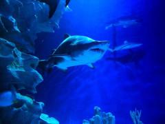 Enjoy 10% Off Admission Ticket in aquariaKLCC for Avis Members