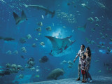 2 S.E.A. Aquarium Adult One-Day Tickets at SGD52 this National Day
