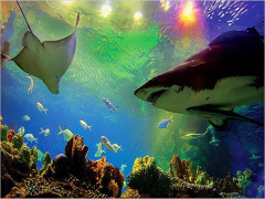 10% Off aquariaKLCC Admission Ticket with KL Walk & Tours Map