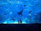 Special Rate in S.E.A. Aquarium Adult Ticket with OCBC Mastercard