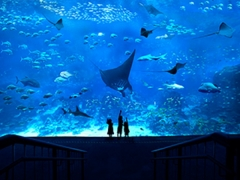 S.E.A. Aquarium Ticket at SGD28 with OCBC MasterCard