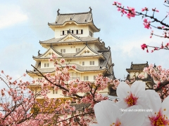 Fly to Japan from SGD 658 with Garuda Indonesia Special Offer