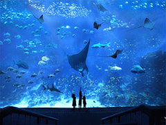 S.E.A. Aquarium Adult One-Day Ticket at S$30 with UOB Card