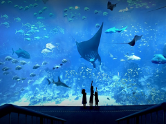 Mastercard® Exclusive: S.E.A. Aquarium Adult One-Day Tickets + Free Popcorn at S$30 (Min. 2 to go)