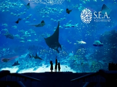 50% OFF 2nd Adult Admission to S.E.A. Aquarium with NTUC Card