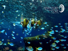 50% OFF 2nd Adult Admission in Adventure Cove Waterpark with NTUC Card