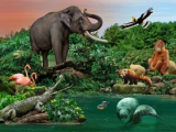 NTUC, SAFRA and PAssion Card Members' Promotion   10% Savings in Wildlife Reserves Singapore Attractions