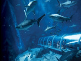 Special Offer in Resorts World Sentosa for an Under the Sea Exploration with MasterCard