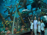 S.E.A. Aquarium Family Annual Pass Bundle at SGD272