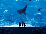 Buy S.E.A. Aquarium and The Maritime Experiential Museum Adult One-Day Ticket + SGD5 Meal Voucher at SGD41