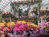 Gardens by the Bay, Flower Dome (Orchid Extravaganza) Special Offer Exclusive for OCBC Cardholders