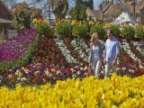 Discover the best of Sydney in Spring with Singapore Airlines