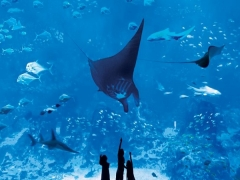 Singapore Residents Only - S.E.A. Aquarium™ Glowing Ocean Family Bundle at SGD78