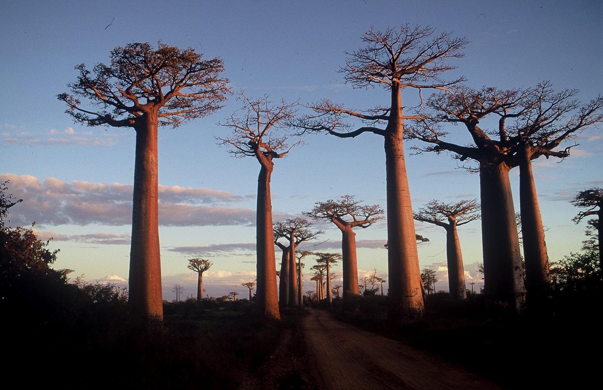 12D9N HIGHLIGHTS OF MADAGASCAR (NOV - MAR)