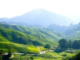 2D1N Cameron Highlands