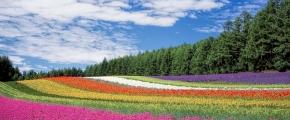 7D Hokkaido Ice Wonders