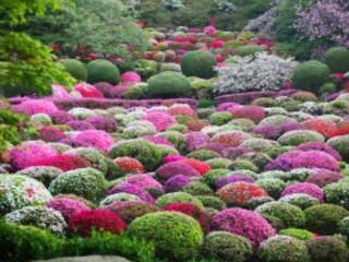 Kyushu Spring Flower & Onsen Indulgence 8D6N