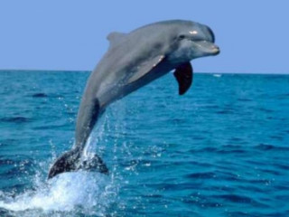 4D Bali Dophin