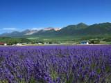 7 Days Hokkaido Tours