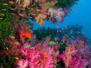 8D Dive Beqa in Fiji