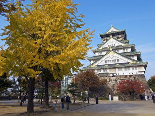 4D3N Osaka 1-for 1