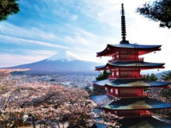 5D4N Tokyo Sakura Plus