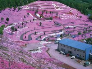 Hokkaido Flower Story 8D5N
