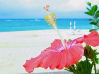 5D4N Okinawa Free & Easy PLUS (SilkAir Chartered Flight)