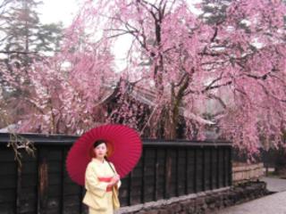 8D6N Tohoku Sakura & Snow (18 Apr)