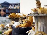 Cat Island & Tokyo