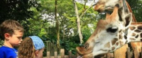 Singapore Zoo [Open ticket]