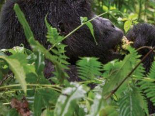 9D Rwanda & Uganda Gorilla Discovery