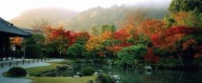 8D6N Colours of Western Japan (21 Nov 2017)
