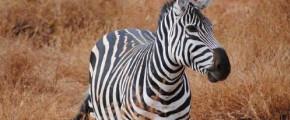 13D KENYA AND TANZANIA MIGRATION EXPERIENCE
