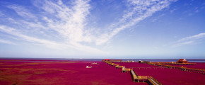 8/10D Panjin Red Beach, Mt. Changbai / Harbin