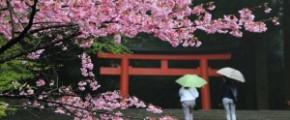 5D4N Spring in Kagoshima (24 Mar)