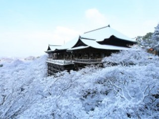 8D6N Winter Central Japan (13 Dec 2017)