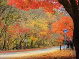 8D6N Autumn Korea + Jeju