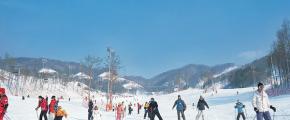8D6N Eat . Ski. Play + Jeju