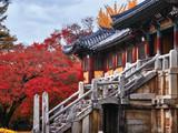 7 Day Korea Autumn Highlights + 1 Night