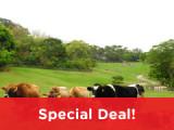 6 Days Taiwan Hot Spring & Farm Tour - Flying Cow Farm & Cing Jing Farm