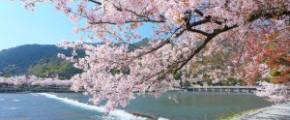7D6N Sakura Delight (30 Mar 2018)