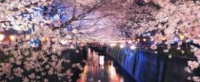 7D6N Sakura Fantasy (28 Mar 2018)