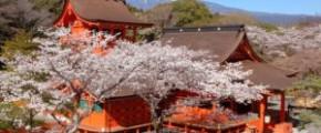 7D6N Sakura Plus Twin City Special
