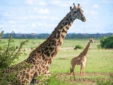 5D Kenya Mombasa Tour Package